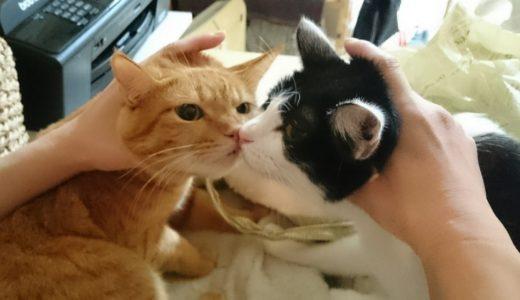 猫の妊娠から出産までの愛の物語(のこ・ちゃと郎編)