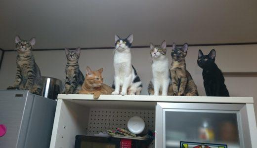 日本猫のオスとメス・種類によって性格が違う?我が家の猫7匹を比べてみた