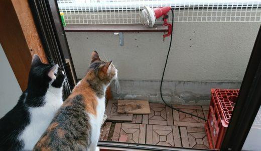 猫がベランダに出たがってる!柵をdiyして脱走防止する方法