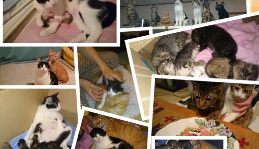 猫の多数飼いで、兄弟たまに喧嘩!でも楽しいのが最大のメリットです