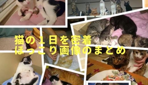 猫の癒し効果はすごい!我が家の猫画像で1日のほっこり生活を検証!